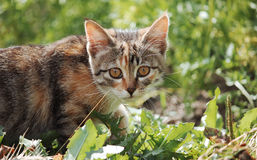 Cat. Animals in nature. Russia Yekaterinburg Royalty Free Stock Images