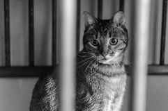 Animal shelter homeless cat. Young cat sitting and looking for new owner Royalty Free Stock Photography