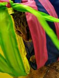 Cat. Animsl animal nature colorful eyes royalty free stock photography
