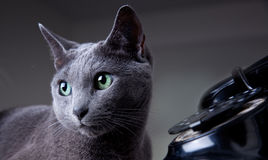 Cat with antique phone Stock Photos