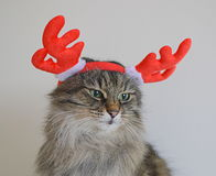 Cat with antlers deer Stock Image