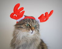 Cat with antlers deer Stock Photos