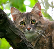 Cat in an apple tree. Little cat in an apple tree with great eyes royalty free stock photography