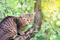Cat on the apple tree Royalty Free Stock Image