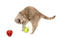 Cat apples Royalty Free Stock Images