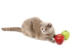 Cat apples Royalty Free Stock Photography