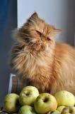 Cat Apples royalty free stock photos