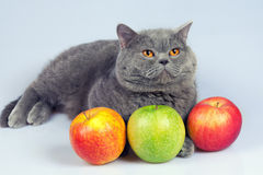 Cat with apples Stock Photos