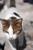 Cat approaching Royalty Free Stock Images