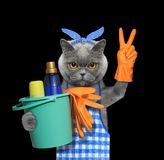 Cat in apron doing household chores. Isolated on black. Background stock image