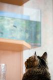 Cat and aquarium. Stock Image