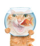 Cat with an aquarium. Stock Photos