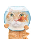 Cat with an aquarium. Stock Images