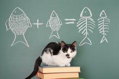 Cat arithmetic Stock Image