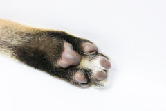 Cat arm raised paw isolated Stock Photo