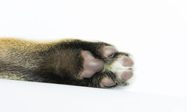 Cat arm raised paw  Royalty Free Stock Photo