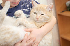 Cat in the arms of boy Royalty Free Stock Photo