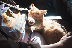 Cat in arms Stock Photo