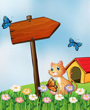A cat beside an arrow board Stock Images