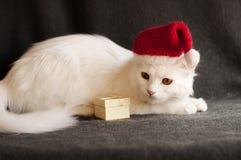 Cat as Santa Royalty Free Stock Image