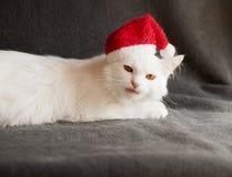 Cat as Santa Royalty Free Stock Photos