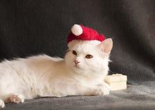 Cat as Santa Royalty Free Stock Photo