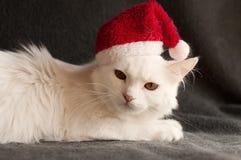 Cat as Santa Stock Images