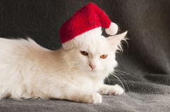 Cat as Santa Stock Photography