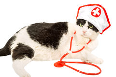 Vet Cat Royalty Free Stock Images