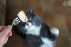 Cat asks for food. stock image