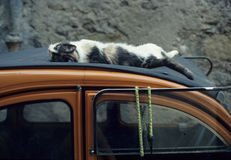 Cat asleep on the roof of a car Stock Photos