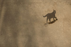 The cat is on the asphalt. Royalty Free Stock Images
