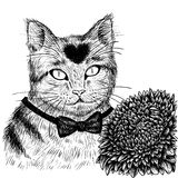 Cat with aster flower hand drawn. Stock Photo