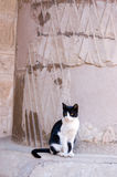 Cat At Ancient Egyptian Temple Stock Image