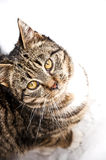 Cat At Snow Royalty Free Stock Photography