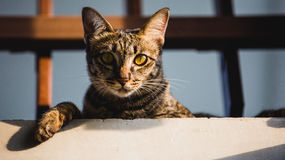 Cat. Atta is a cat in baan-phe rayong thailand Stock Photo