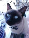 Cat& x27 ; attention de s photo stock