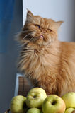Cat autumn apples Royalty Free Stock Photos