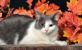 Cat on the autumn background Royalty Free Stock Photo