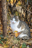 Cat in  autumn day Royalty Free Stock Photos