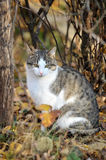 Cat in  autumn day Stock Photography