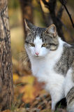 Cat in  autumn day Royalty Free Stock Images