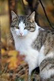 Cat in  autumn day Stock Image