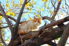 Cat on autumn tree Stock Images