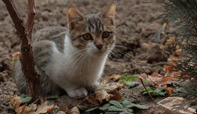 Cat and autumn Royalty Free Stock Photo