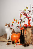 Cat and autumnal composition Stock Photo