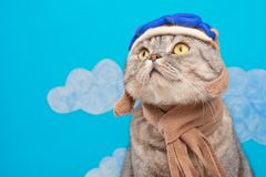 Cat aviator pilot, Scottish Whiskas in mask and goggles pilot aircraft. Concept of the pilot, super cat, flying stock image