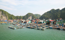 Cat ba Vietnam Royalty Free Stock Images