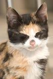 Cat baby Royalty Free Stock Photo