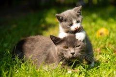 Cat with the baby kitten on grass. Family of cats outdoor. Cat with the baby kitten on grass. Cat hugs kitten. Cat plays kitten stock photo